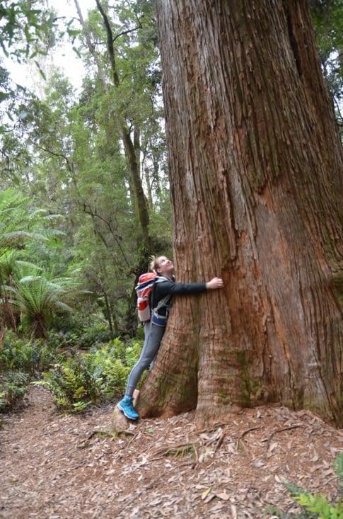Incroyables eucalyptus