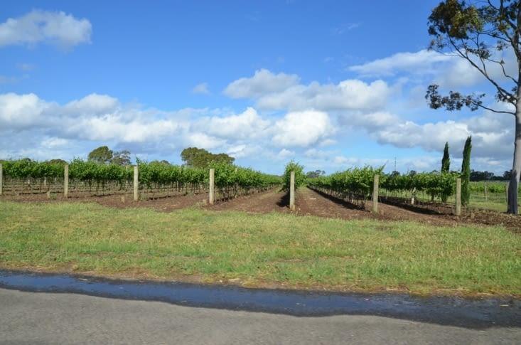 Traversée d'immenses vignobles