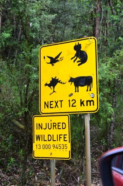 Apparemment on peut croiser de drôles d'animaux par ici 😲
