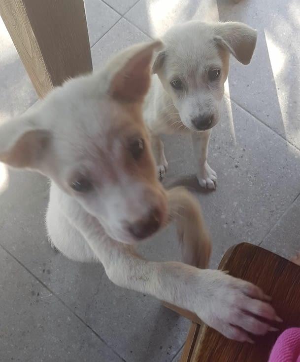 Deux chiots grattent à notre porte (mâle et femelle)