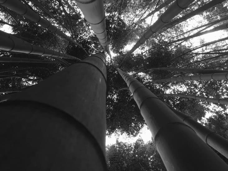 La forêt de bambous de Kyoto