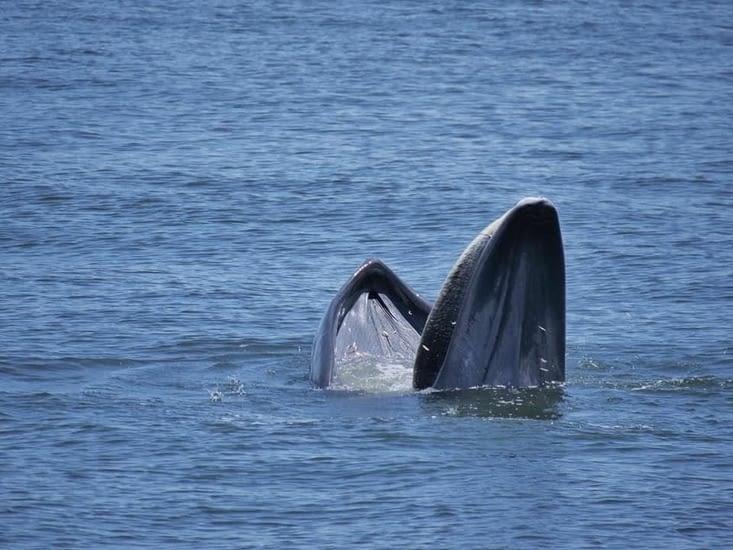 La découverte de baleines en Thailande