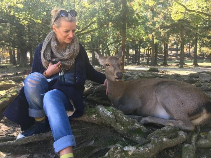 Nara park in Japan with its 1200 deers