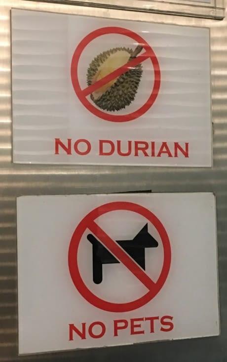 Le Durian, fruit Asiatique : interdit dans les hôtels et taxis ...odeur fromage !