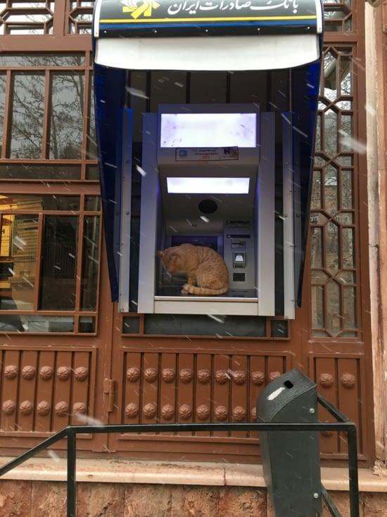 """Même les chats ont besoin de """"cash"""" en Iran !!"""