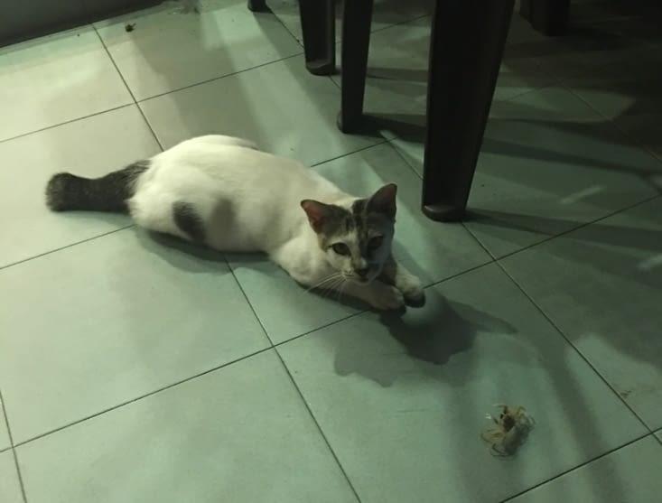Un crabe et un chat ... drôle de combat !