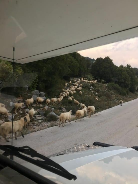 On a eu le temps de compter les moutons !