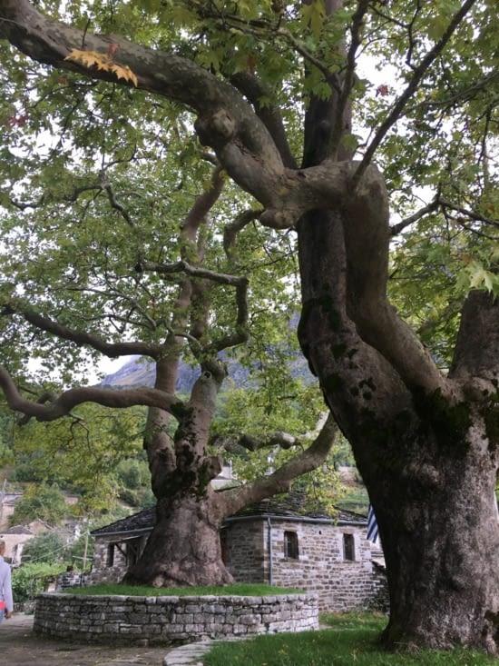 C'est pas un arbre de P..é !!!!