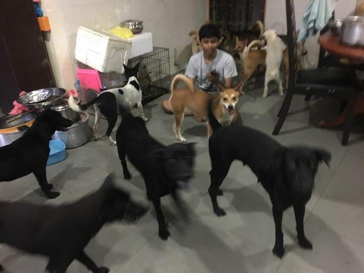 15 chiens dans une maison !