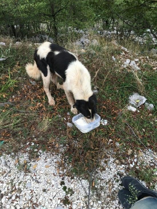 Des milliers de chiens abandonnés. Des associations tentent d'intervenir sur le terrain mais c'est quasi impossible car ils sont de plus en plus nombreux (affamés, malades). Nous achetons des croquettes et nous leur en distribuons ...