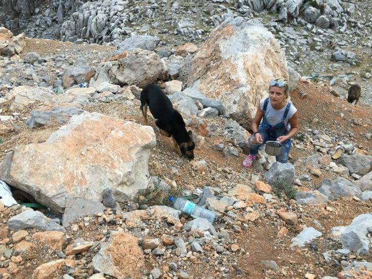 Une après midi que l'on voudrait oubliée !!! Sur la route vers la Cappadoce, au bord de route une quinzaine de chiens errants, certains malades, tous apeurés à notre approche.