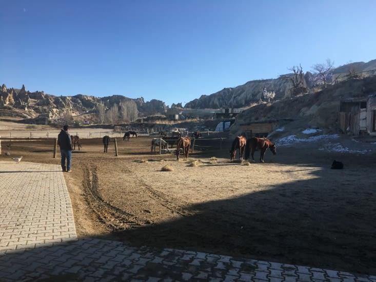 Un centre équestre prêt de Goreme .... des randonnees a La semaine à travers les vallées de la Cappadoce