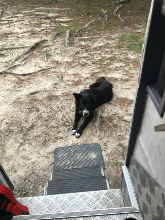 Zaphiris, encore un chien abandonné qui vient nous demander de la nourriture. Ce que nous avons fait tous les jours durant 3 semaines. Mais on ne pouvait pas le toucher, ni l'approcher. Surement qu'il a été battu !!