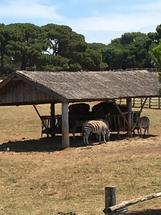Eh oui on a trouvé des copains à Zebrakid sur l île! Des zebres