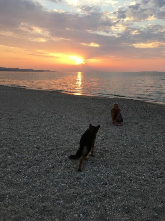 """Un chien de plus abandonné sur une plage de Corfou (voir """"eco-volontariat)"""