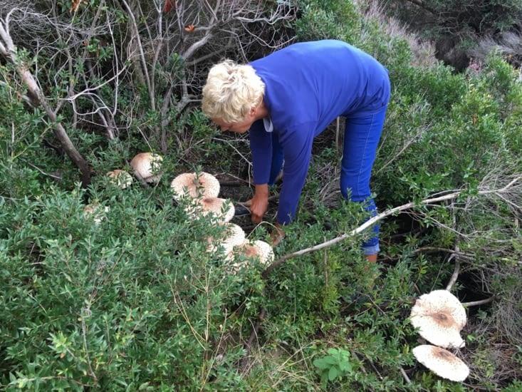 Des champignons (20 cm de diametre ...) comestible .... mais surtout excelent avec de la creme !