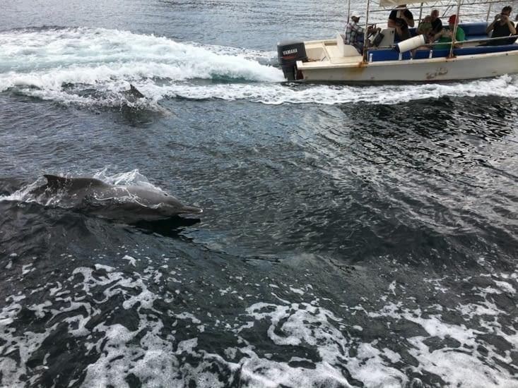 Un grand moment d'émotion : les dauphins blanc