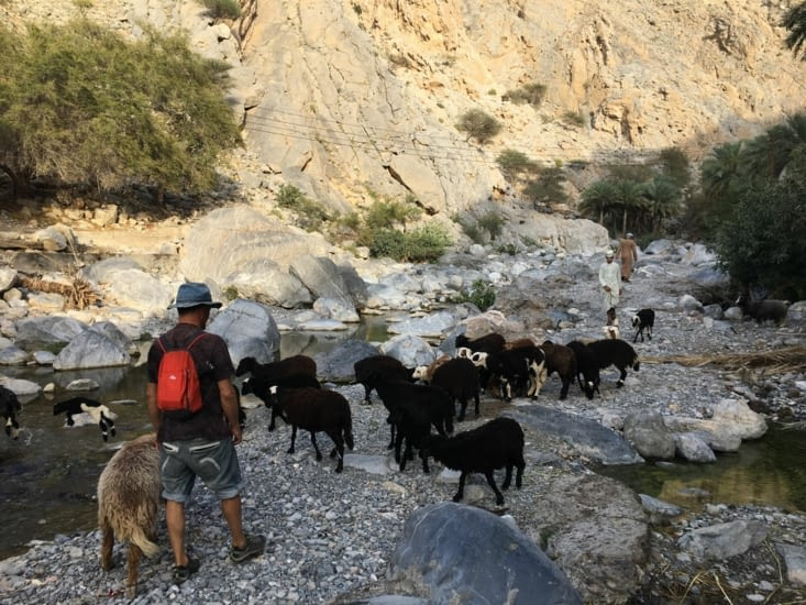 La seule source de revenu de La région : chèvres et moutons ...