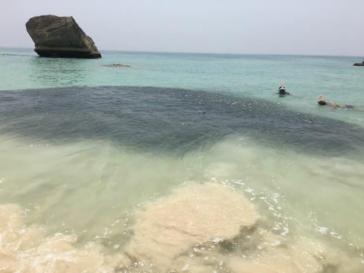 Juste un banc de sardines ... dont raffolent les dauphins