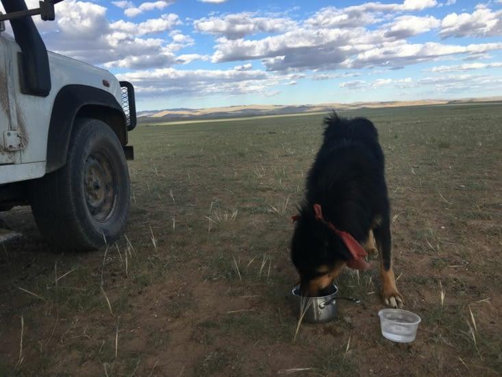 Un compagnon de route (probablement un chien de troupeaux).