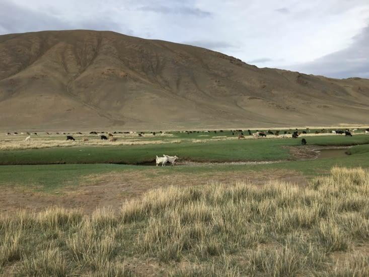 2 ieme ... des troupeaux partout (vache, chèvre, mouton, yak, chevaux)