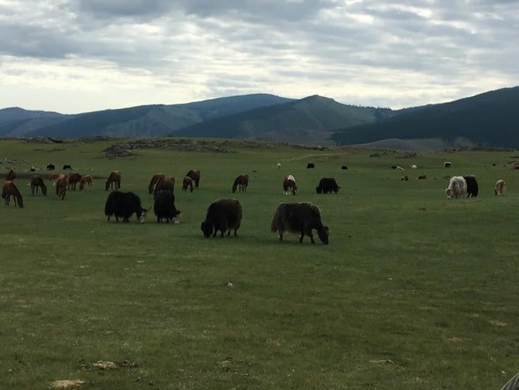 Tout simplement la Mongolie ...