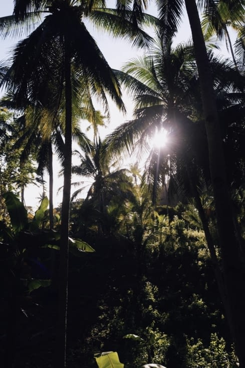 Les lumières à travers les palmiers ... magnifique !