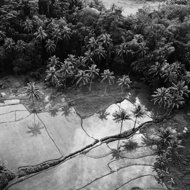 Les rizières inondées...  merci Eliott pour cette photo !