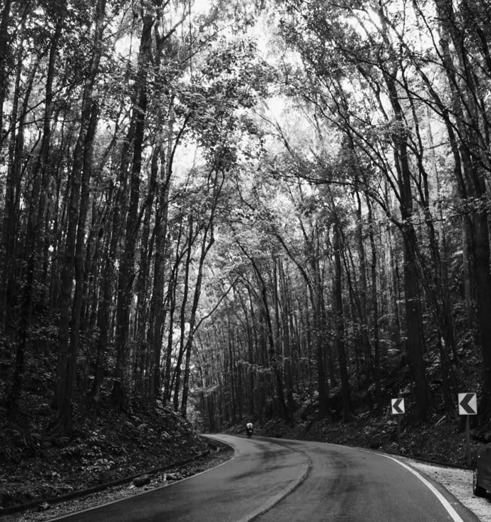 Bilar Man-Made Forest : Une forêt dense tout au long de la route ...