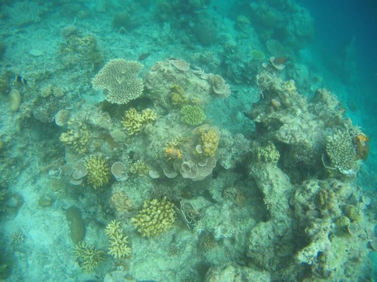 Des coraux à couper le souffle à juste 1 m de profondeur !