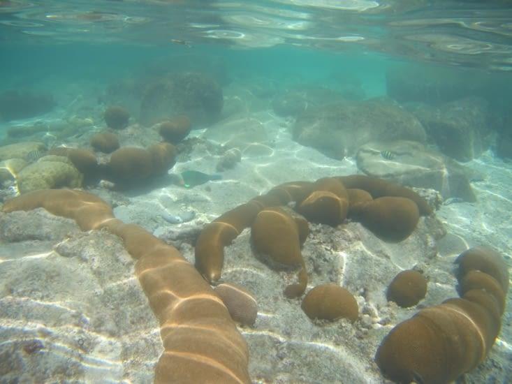 Un corail ... des Coraux !