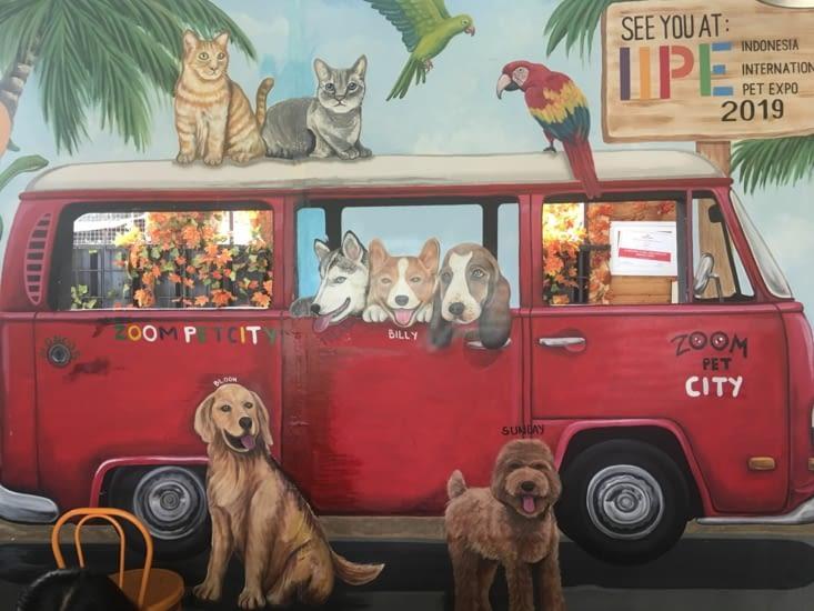 Journée spéciale pour Eva ... un centre aéré pour seulement des chiens !