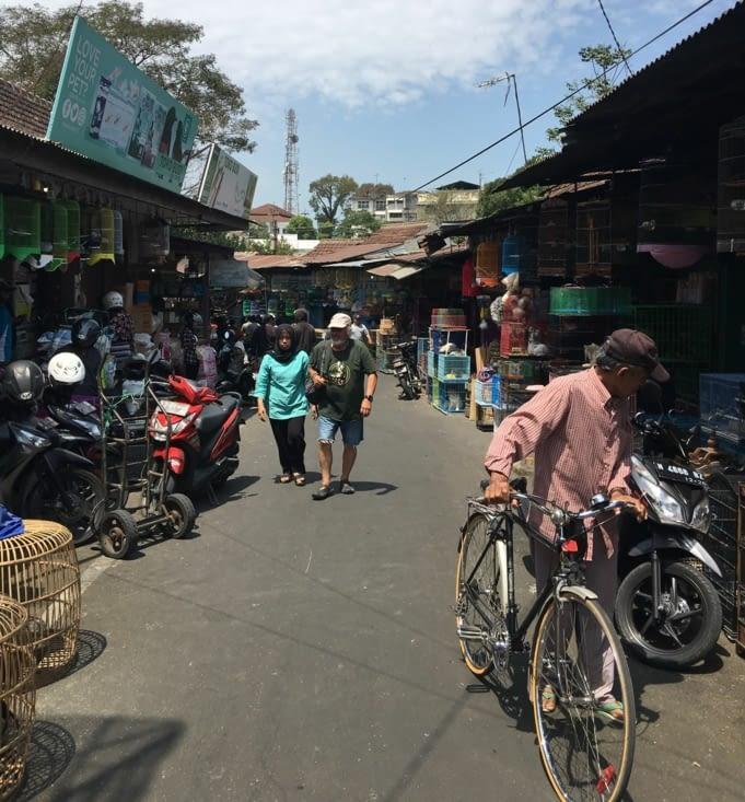 Visite du marché à Oiseaux ! Ils en sont «fan»