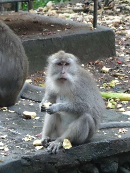 Pour finir cette journée, la forêt des singes