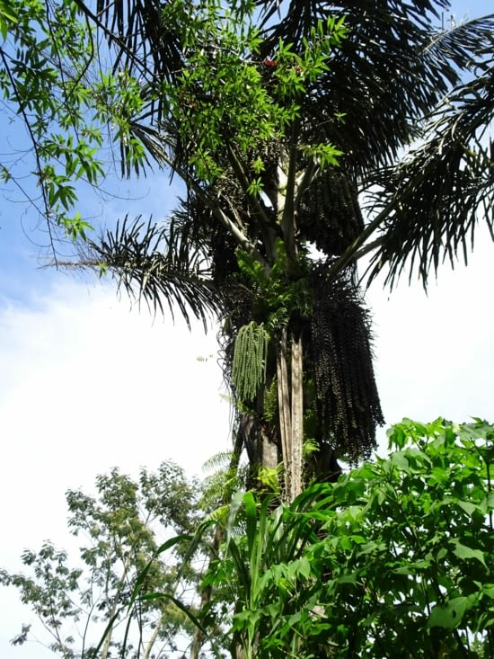 Un arbre, un peu bizarre