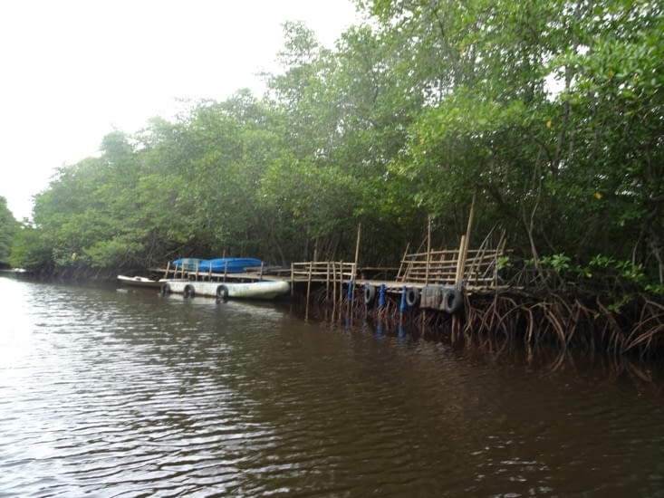 Balade en bateau dans la mangrove