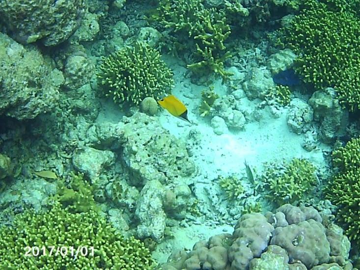 Plongée sur l'île de menjangan