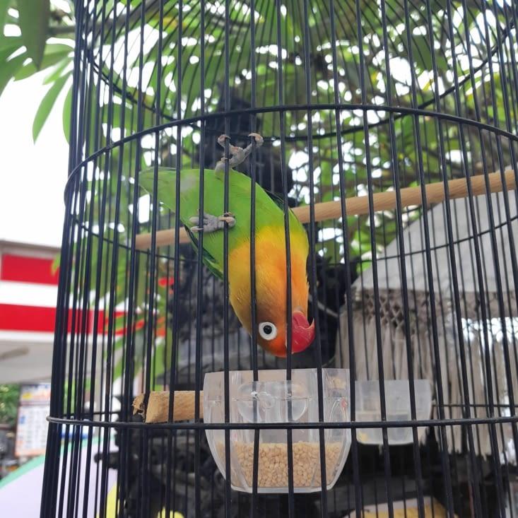 Un oiseau qui pose quand on lui montre un téléphone