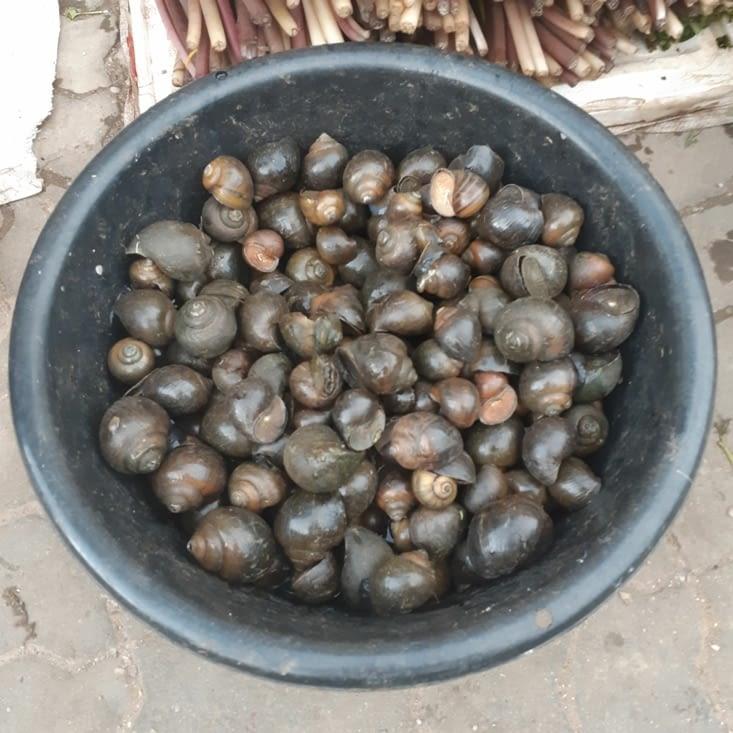 Les escargots de mer pour l'aioli