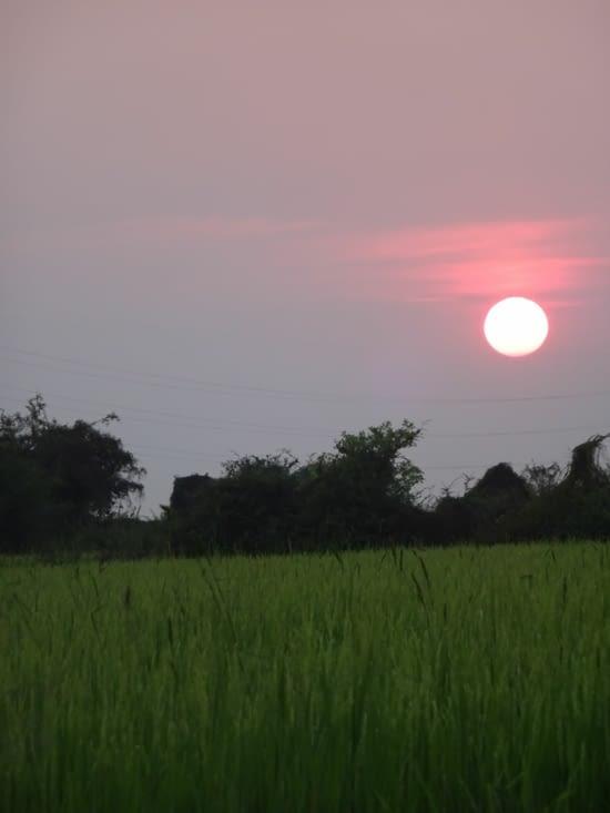 coucher de soleil avec les rizières