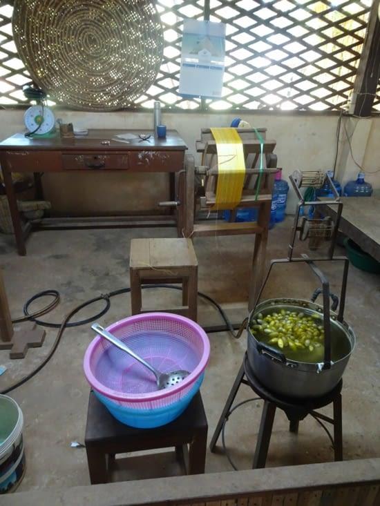 Une fois les cocons formés, il faut les faire bouillir pour récolter le fil de soie