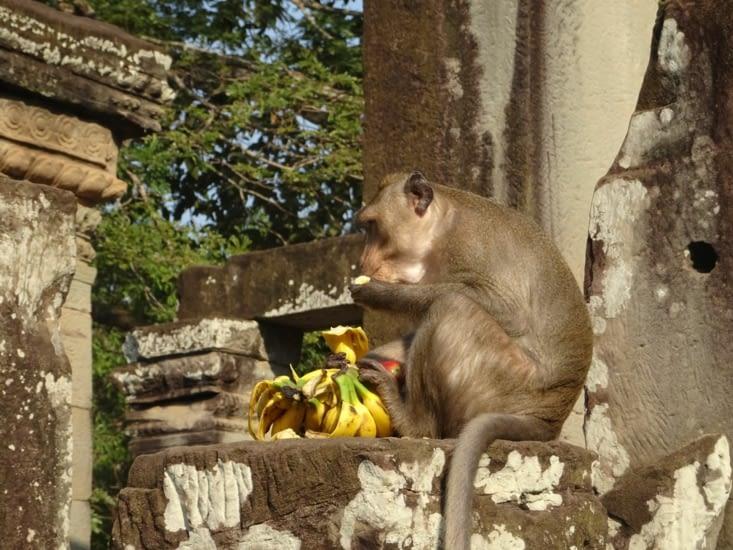 Voleur de bananes