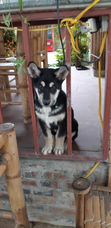Et voici Bétise ! Ce chien dort où on séjourne et il ne fait que des bétises !