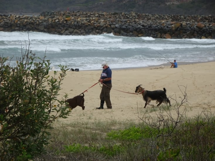 Il promène sa chèvre sur la plage