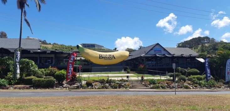 Emblème de coffs harbour, la big banana !