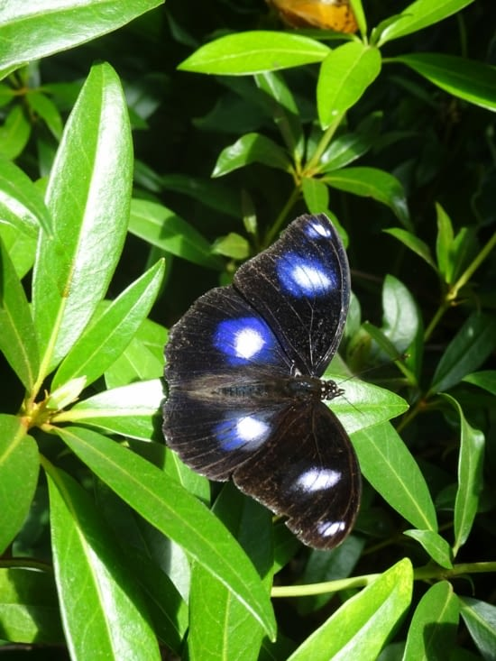 Papillon 🦋