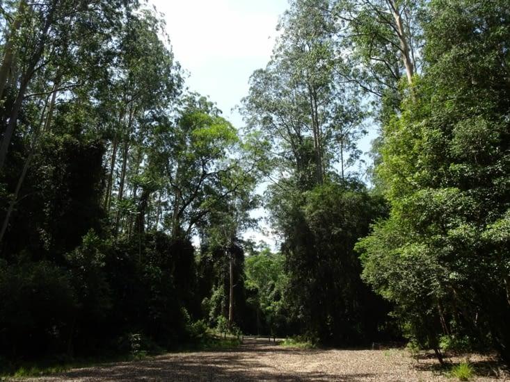 La végétation du parc