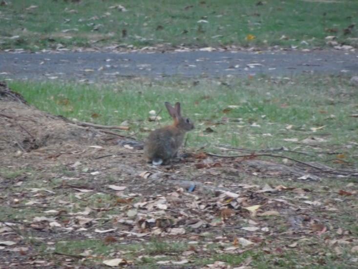 Le lapin 🐇