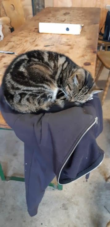 Le chat du domaine