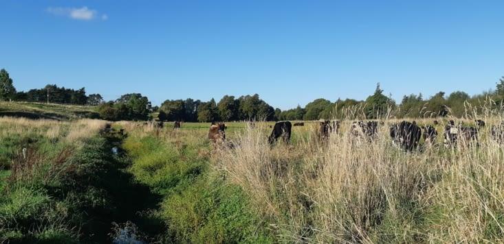 Les vaches du voisin